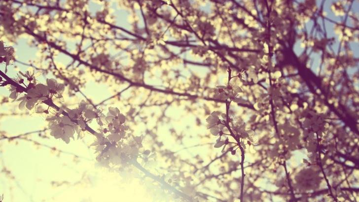 Sé más feliz cultivando la gratitud
